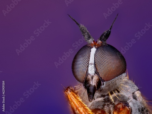 Extreme sharp and detailed macro portrait of small fly