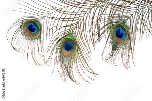 Fototapeta premium Beautiful feather of a peacock isolated on white