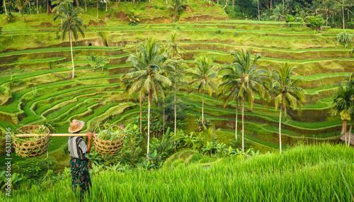 Stampa su Tela Bali, rizière en terrasse