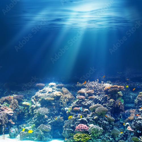 Cuadros en Lienzo Sea or ocean underwater coral reef