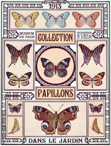 Fototapeta Butterflies collection