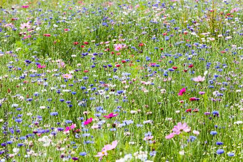 prairie fleurie Fototapeta