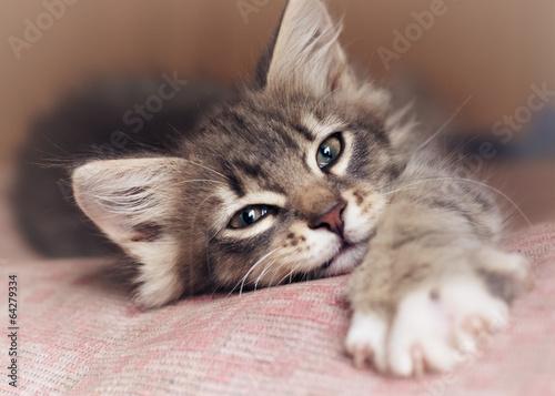 Canvas Print Small kitten