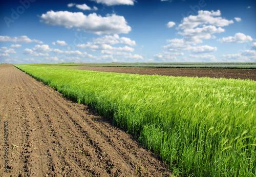 Fotografia wheat field and plowed land