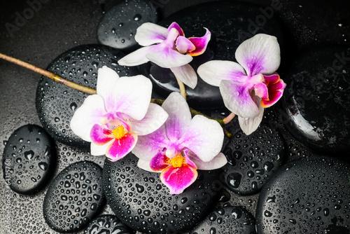 Spa still life of beautiful orchid (mini phalaenopsis) flower an