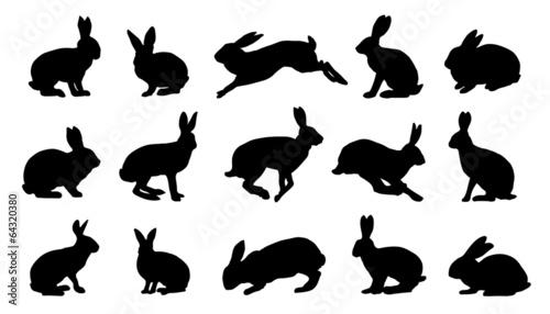 Fototapeta premium sylwetki królika