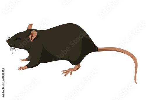 Fototapeta Rat
