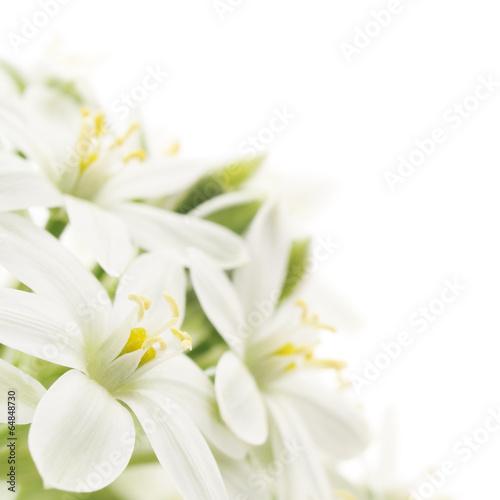 Carta da parati white flowers background