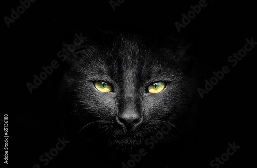 Fotografia Black cat potrait