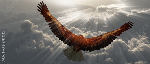 Vászonkép Eagle in flight above the clouds