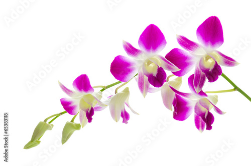 Photo Purple orchid flower isolated white background