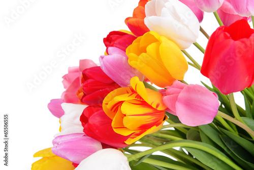 Beautiful tulips in bucket isolated on white
