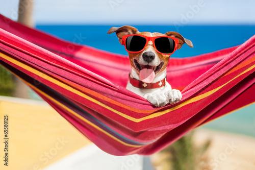 dog on hammock #65580125