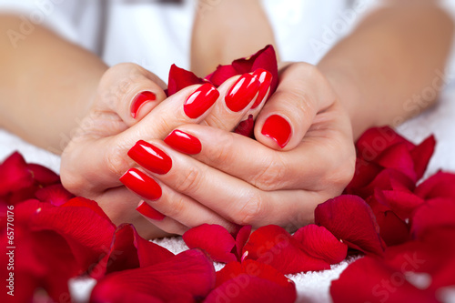 Red manicure on a woman hands with leafs of roses. Fototapet