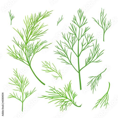 Obraz na plátne Twigs of dill. Green vector twigs