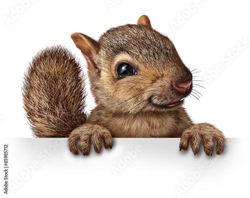 Fototapeta Cute Squirrel