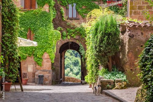 Fototapeta premium Starożytne miasto porośnięte bluszczem w Toskanii