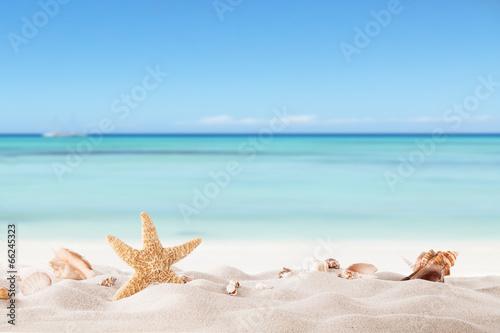 Leinwand Poster Sommer Strand mit strafish und Muscheln