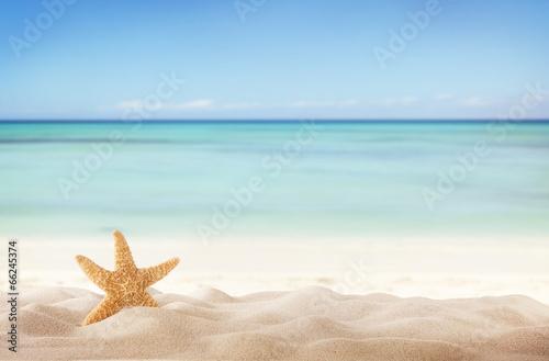 Obraz na plátně Summer beach with starfish
