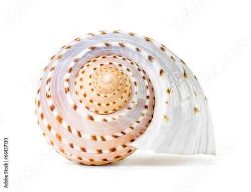 Stampa su Tela Sea shell