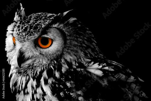 Canvas Print Bengali Eagle Owl (Bubo bengalensis)