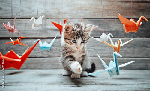 Fotografie, Obraz Kitten is playing with paper cranes