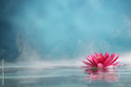 Fotografia water lily
