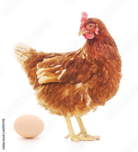 Fototapeta Hen and Egg