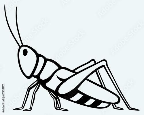 Grasshopper. Image isolated on blue background Fototapet