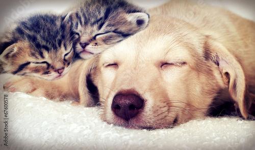 Fotografie, Obraz puppy and kittens sleeping