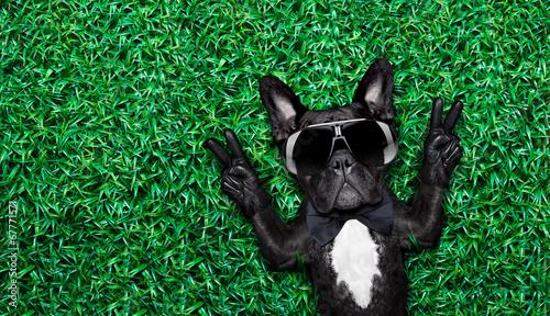 Fotografija cool dog