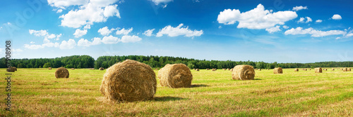 Valokuvatapetti Hay bales with blue sky and fluffy clouds