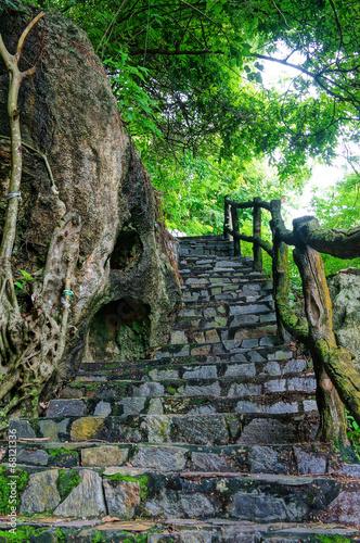 Fototapeta premium Niesamowite kamienne schody, ogrodzenie, drzewo