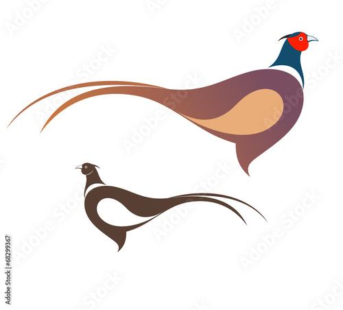 Canvas Print Pheasant