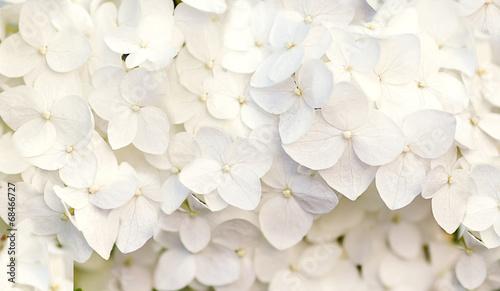 Fotografia, Obraz beautiful floral background in blue colors