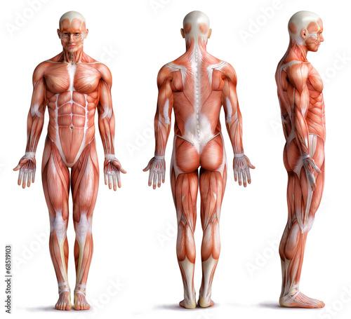 Canvas Print anathomy