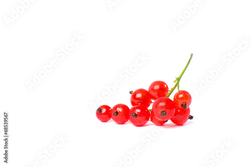 Canvas Print Redcurrant isolated on the white background
