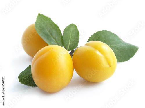 Mirabelle plum (Prunus domestica)
