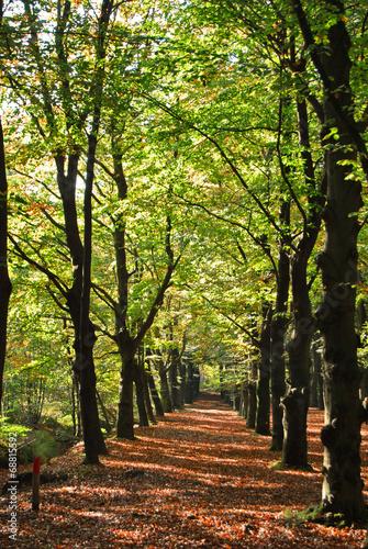 Fotografie, Obraz Mooi wandelpad in de herfst