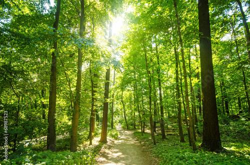Wald mit Morgensonne :) #68987523