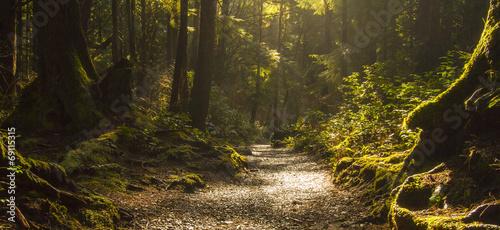 Canvas Print Rainforest Path
