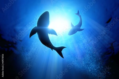 Canvas Print Great White Sharks