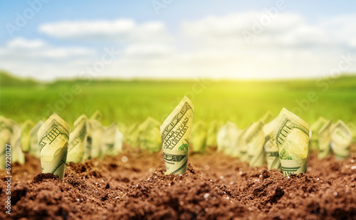Canvas-taulu American dollars grow from the ground