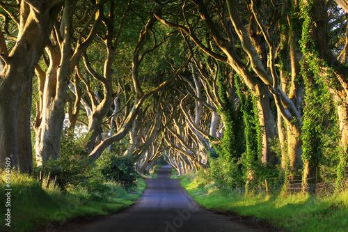 droga-przez-korony-drzew
