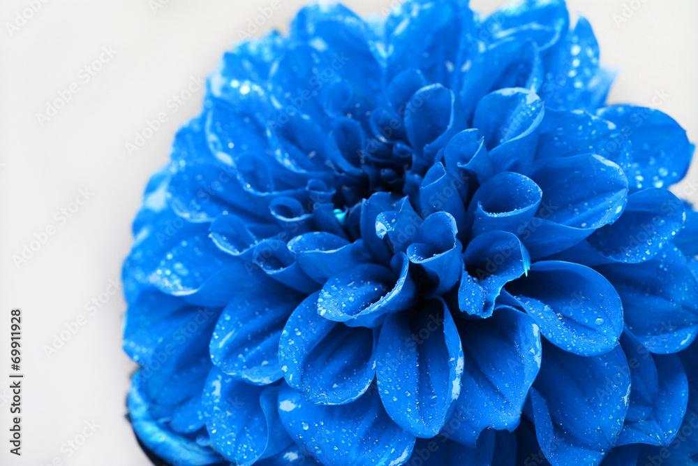 Piękny błękitny kwiatu zakończenie <span>plik: #69911928 | autor: Africa Studio</span>