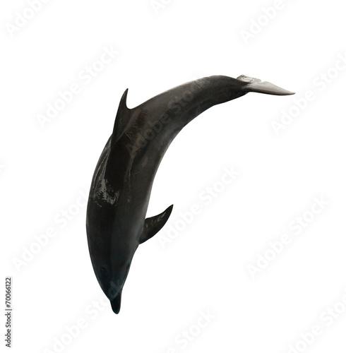 Canvastavla isolated on white dark jumping doplhin
