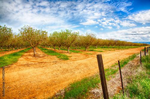 Nut Trees Fototapeta