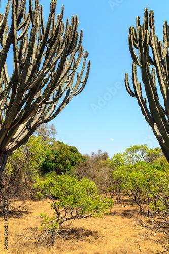 Fototapeta premium Krajobraz Afrykański krzak w lecie