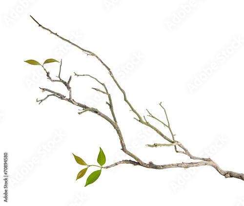 Foto Branch with leaves