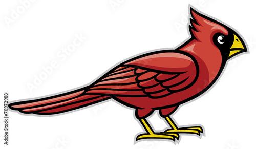 Fotografie, Tablou cardinal bird